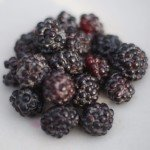 Black raspberry (Rubus occidentalis)
