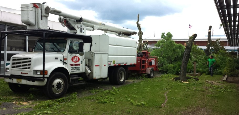a crew removing trees from a property in northern new jersey