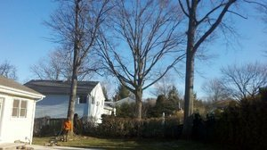 large trees on a property in bergen county, nj
