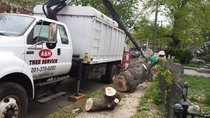 A&H Tree Service crew removing a tree