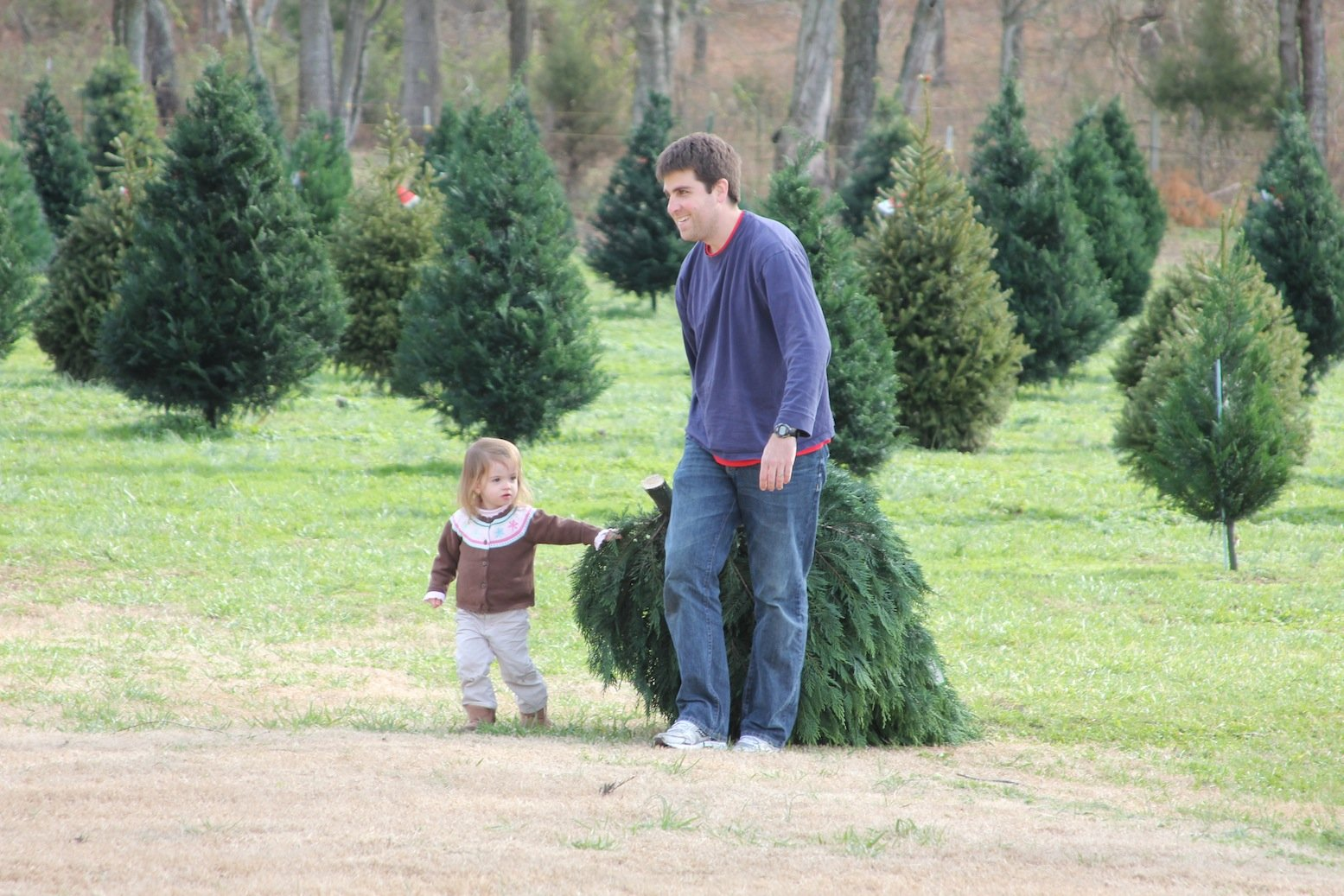 Christmas Tree Adventures Tree Types & Prices