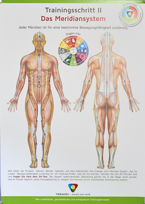 Niedlich Jeder Muskel Im Körper Ideen - Menschliche Anatomie Bilder ...