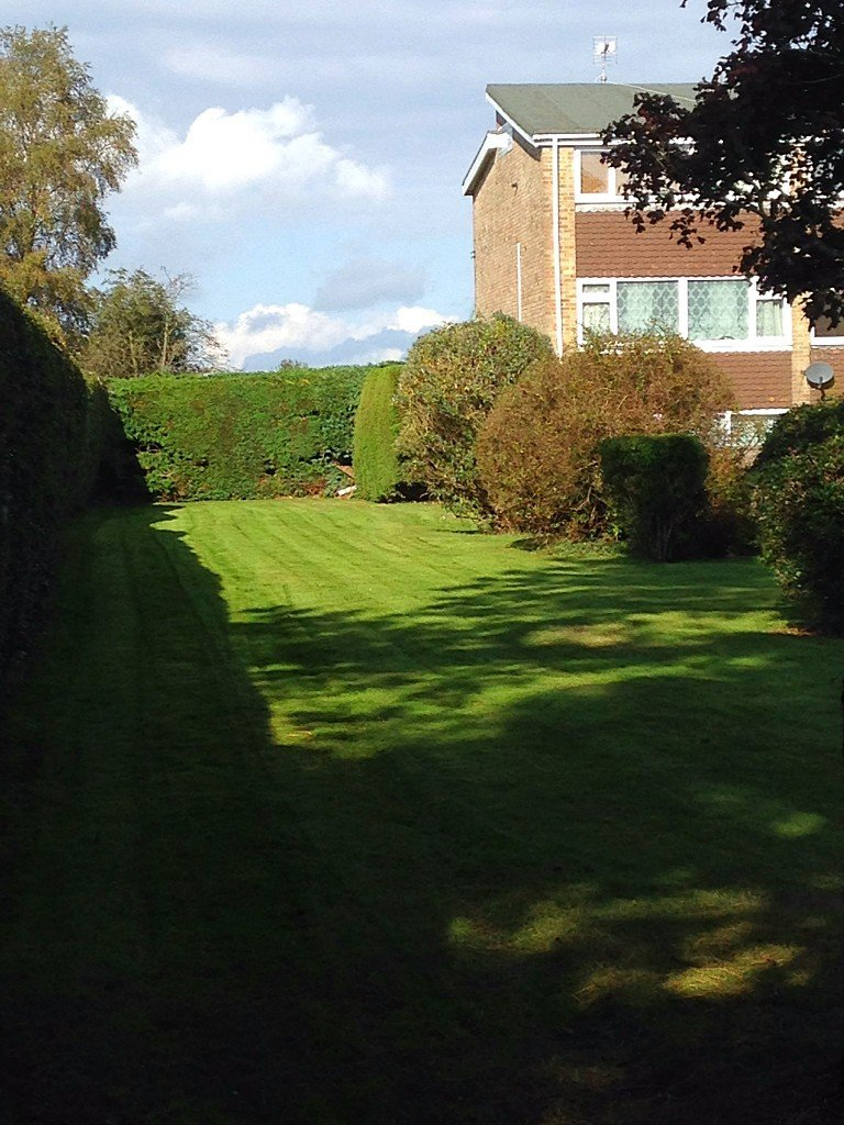 Trimmed hedge on Housing Estate