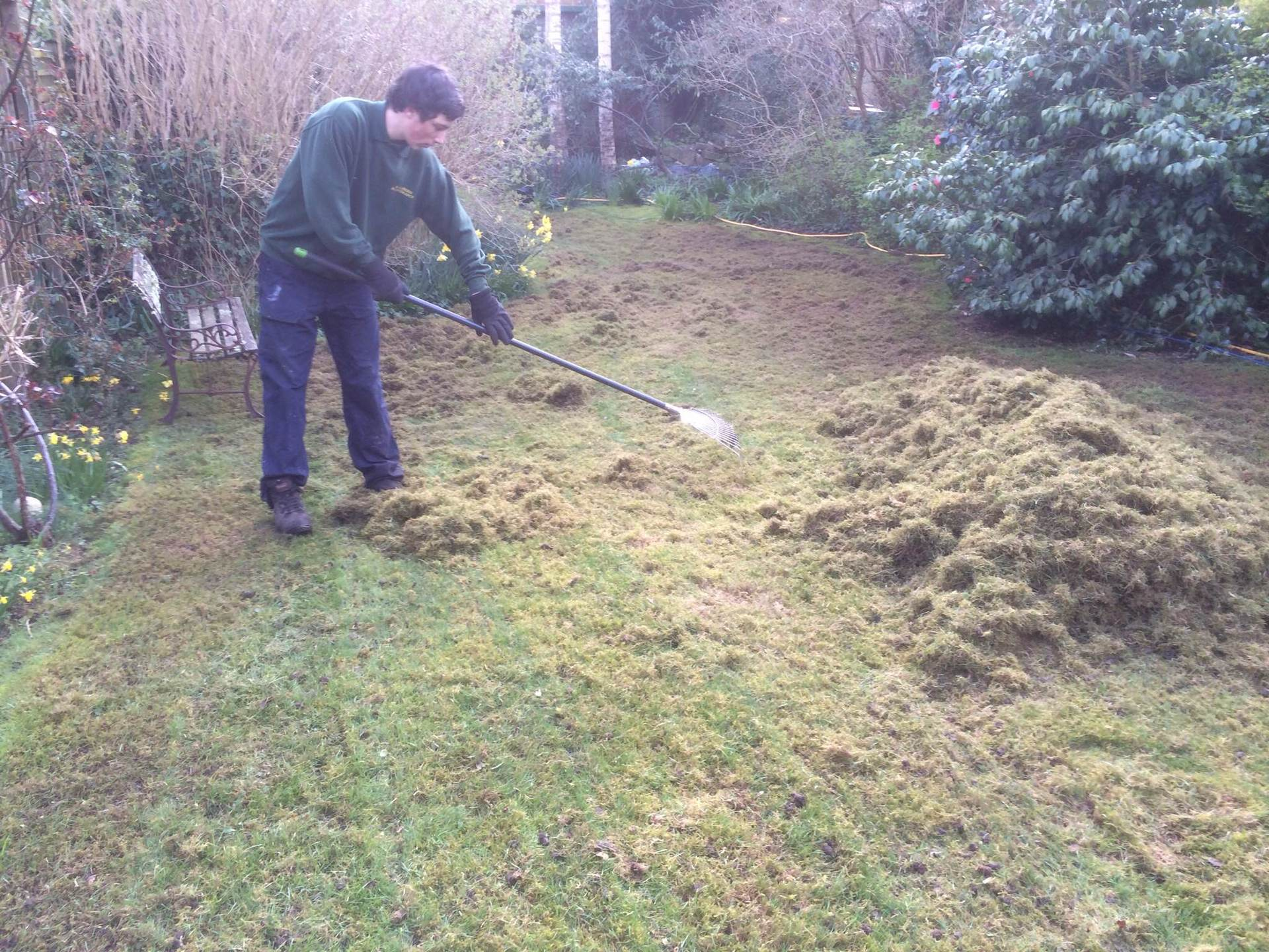 Lawn thatch being collected
