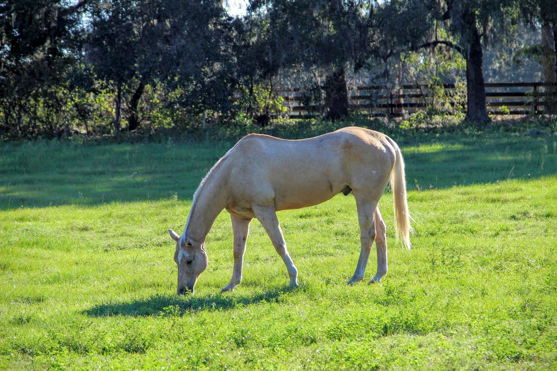 Dream Horse Equestrian Center In Eustis Fl