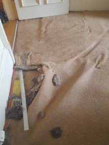 pet damaged carpet glasgow