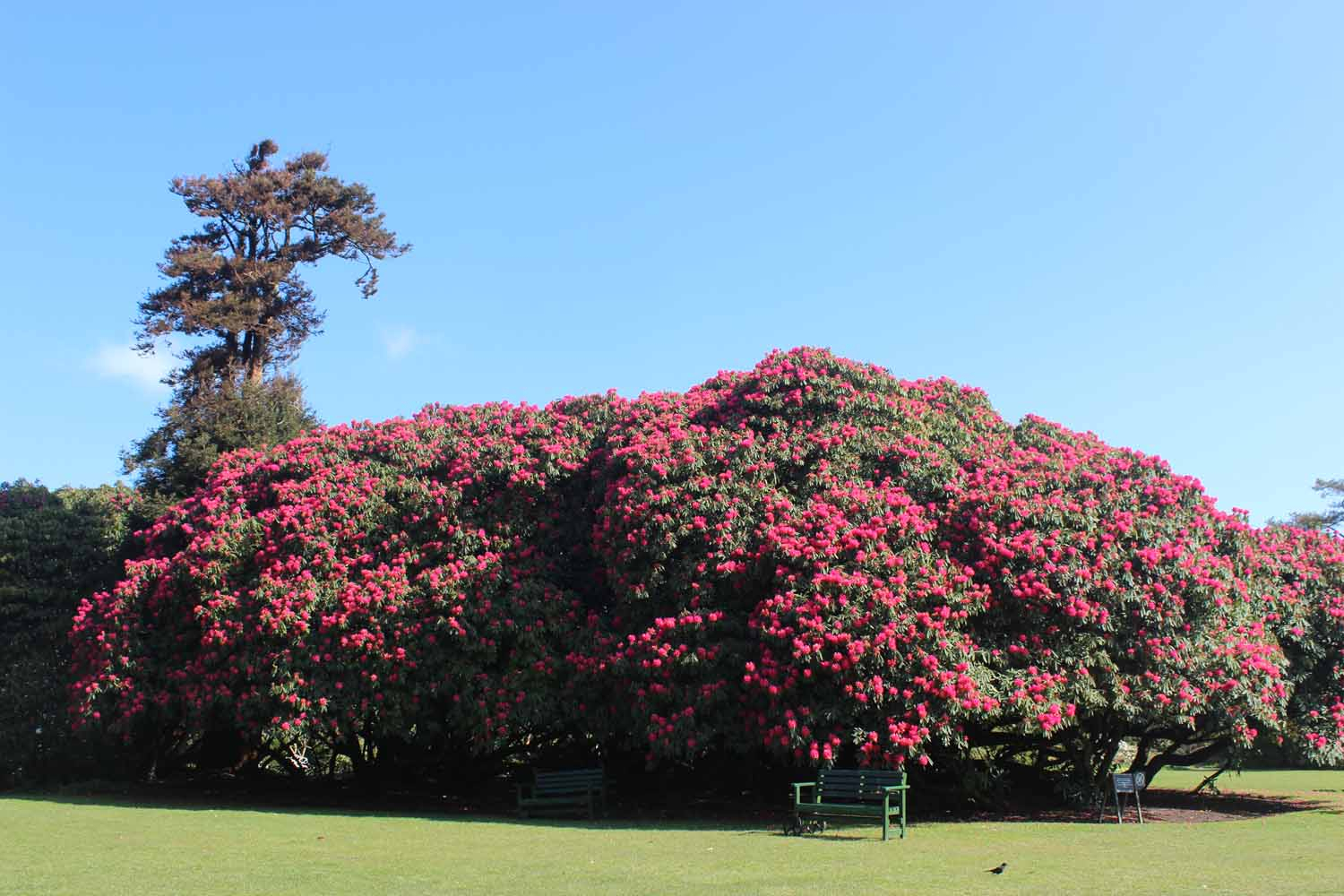 Flora's Green Lost Gardens of Heligan Cornwall in photo gallery by L A Kent author of Silent Gull