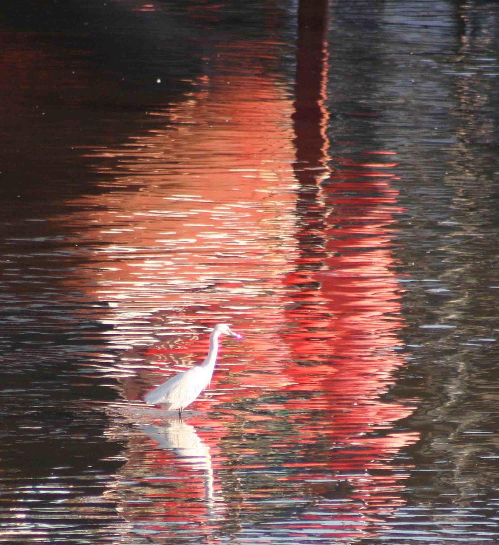 egret stalking in Mevagissey harbour L A Kent DI Treloar series Silent Gull