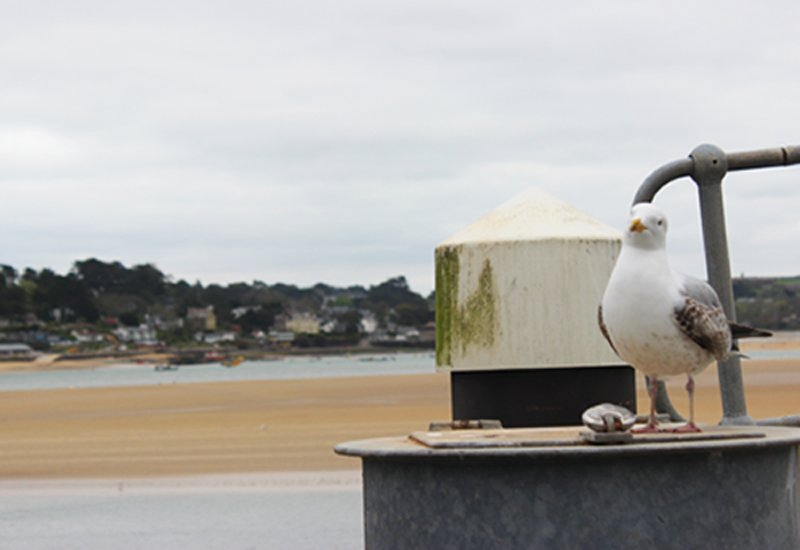 Seagull on Padstow harbourside Cornwall in photo gallery by L A Kent author of Sad Pelican