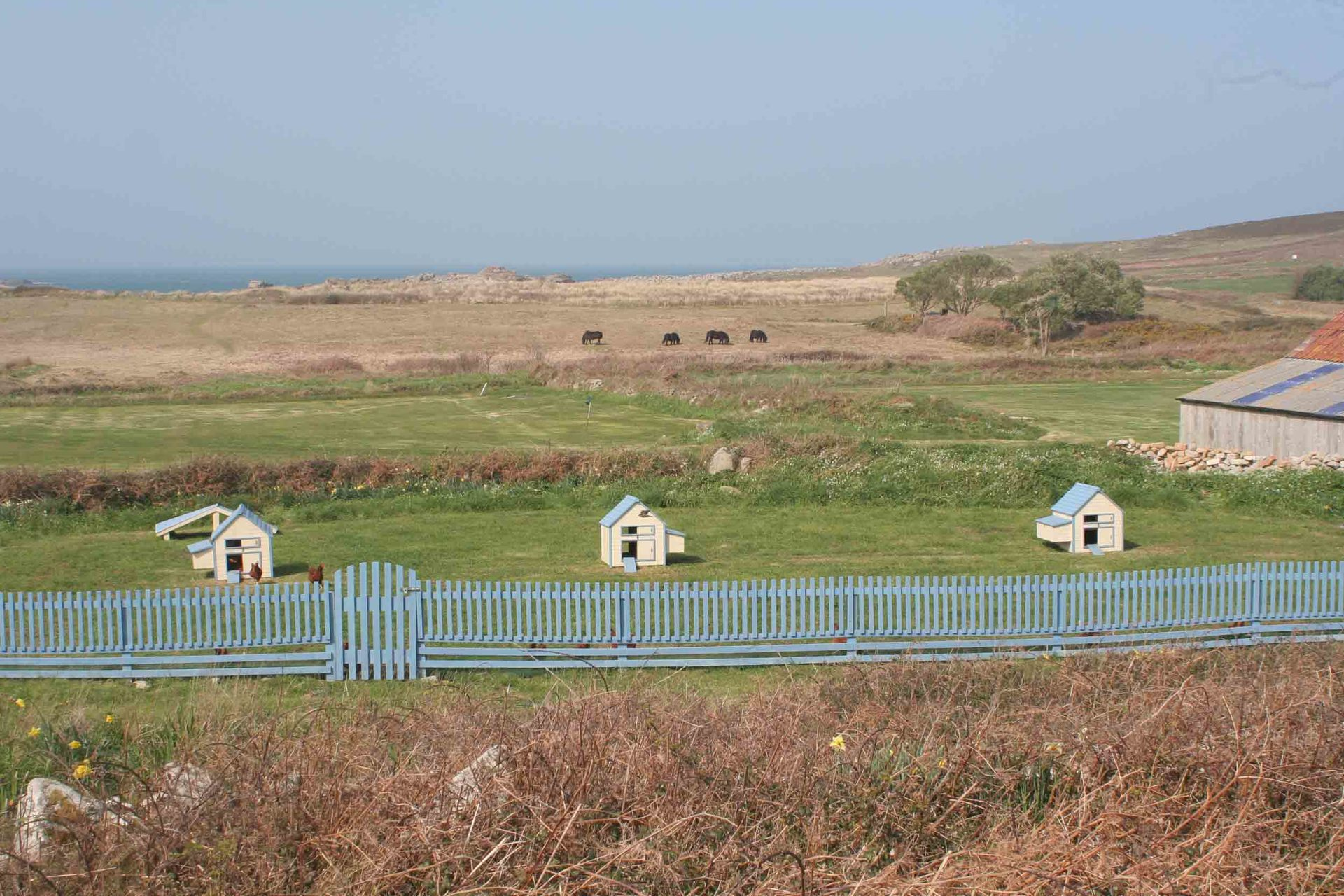 snazzy chicken houses on Bryher Isles of Scilly L A Kent DI Treloar series Sad Pelican
