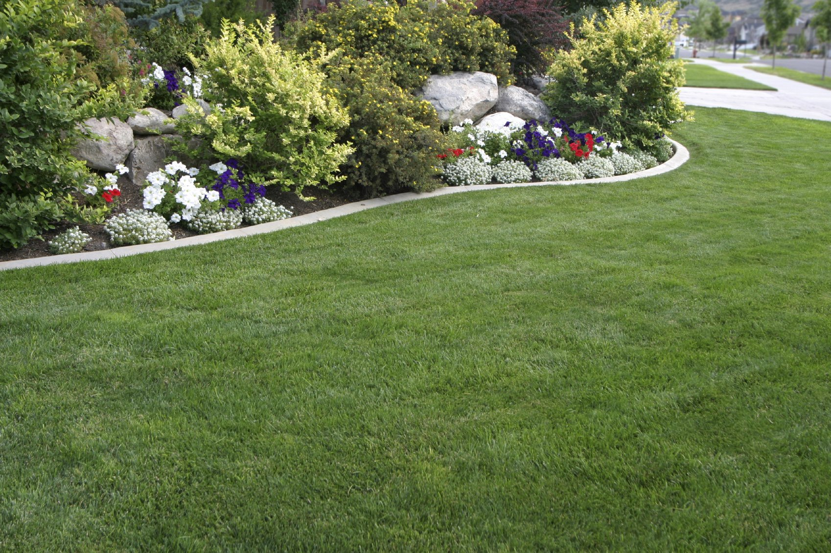 New Lawn Care fort Collins