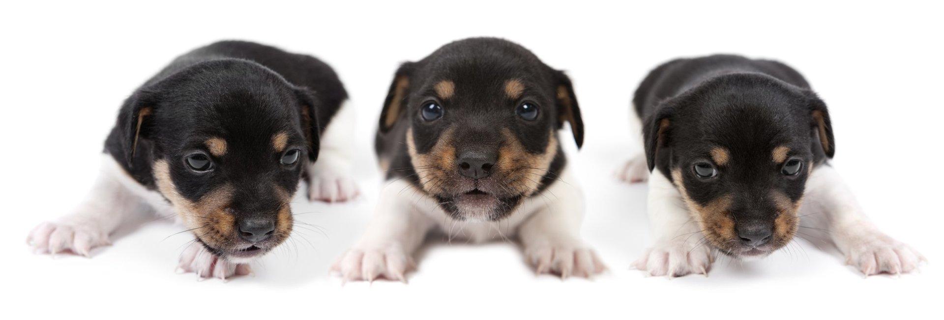 Hundehebamme