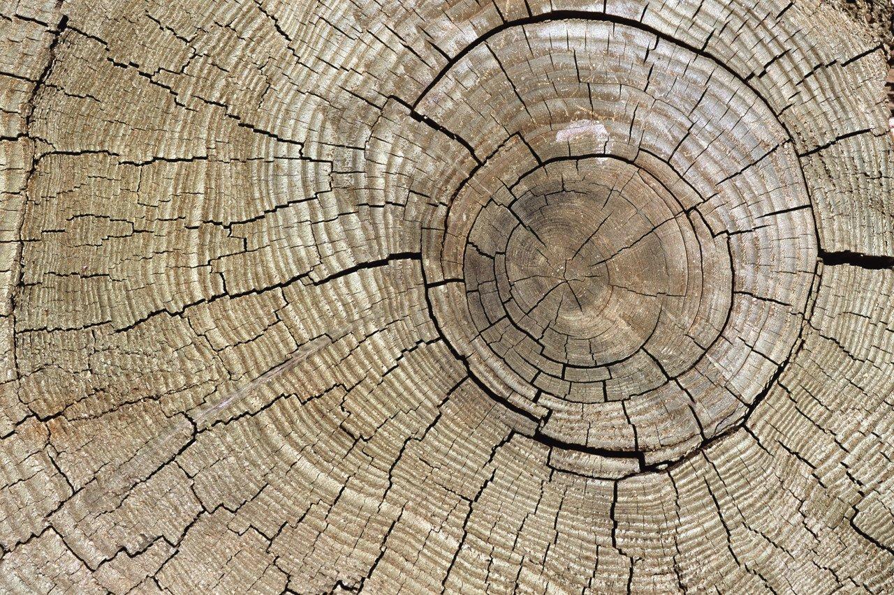 tree stump showing rings